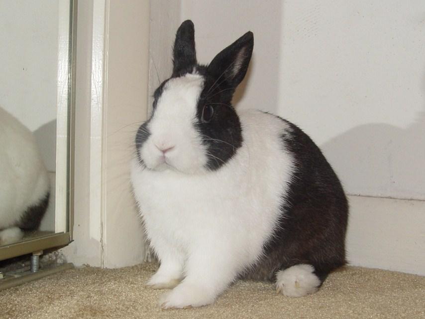 rabbit 129